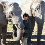 Elefanten - Safari mit dem Südafrika Schüleraustausch.