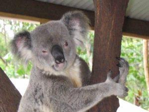Australien Auslandsjahr exotische Tierwelt